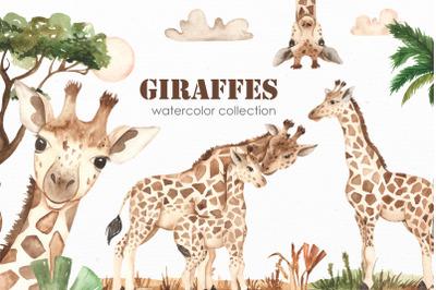 Giraffes. Watercolor collection