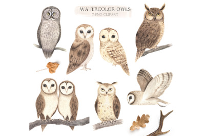 Watercolor Woodland Owl Clipart