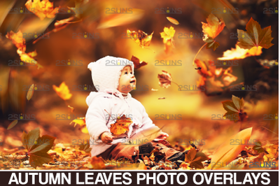 Autumn leaves overlay & Falling leaf, Photoshop overlay: Fall png