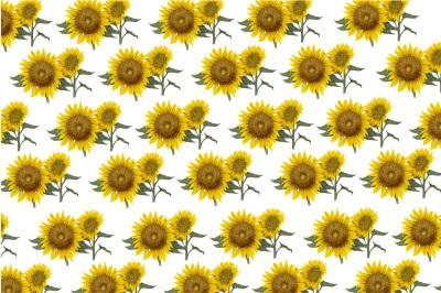 autumn-hand-painting-sunflower-pattern