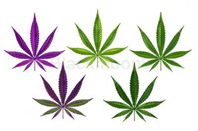 Cannabis Realistic Set
