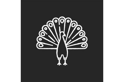 Peacock chalk white icon on black background