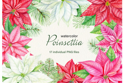 Watercolor christmas poinsettia clipart. Winter watercolor PNG