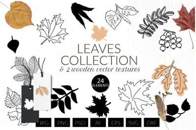 Autumn leaf svg, real leaves png, wooden vector texture