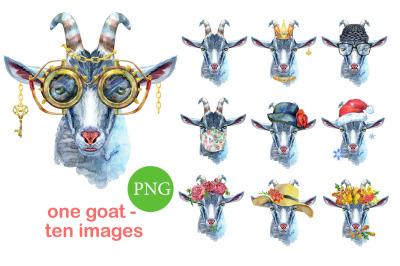 Cheeky gray goat