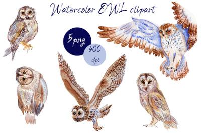 BOHO owl clipart.Watercolor woodland.