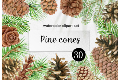 Watercolor pine cones and branches clipart. Christmas wreath PNG
