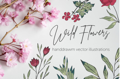 Wild Flowers | vector illustrations