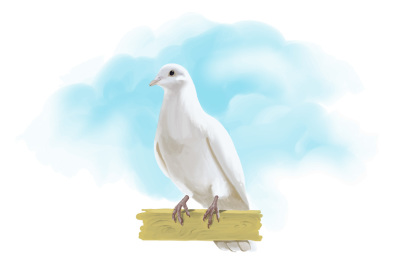 Dove hand painting vector