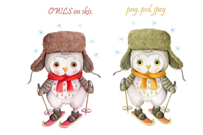 Cute Owls on skis. Watercolor  illustration.