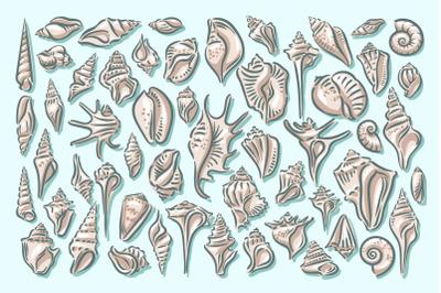 Seashell illustration set with patterns. Seashell, shell, sea, mollusk