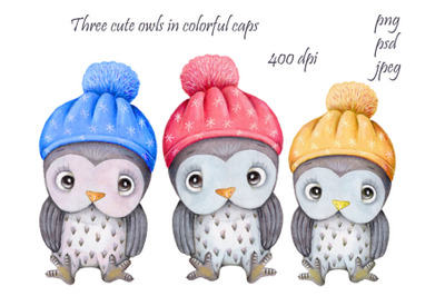 Three owls in colored hats. Watercolor illustrations.