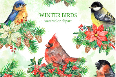 Winter birds watercolor clipart. Christmas cardinal bird. Bullfinch