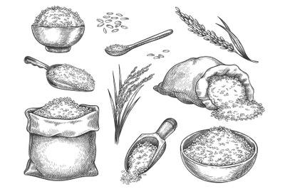 Sketch rice grains. Vintage seeds pile and farm ears. Whole basmati gr