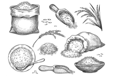 Hand drawn rice flour. Retro engraving cereal spikelets of wheat, rye,