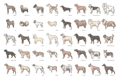 Dog breeds illustrations set