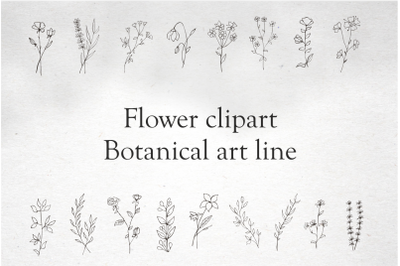 Elements for logo-Botanical clipart - flowers in vector