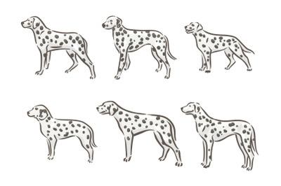 Dalmatian breed dog illustration