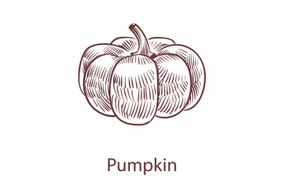 Pumpkin isolated object. Detailed organic product sketch, cooking flav