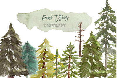 Watercolor Pine Tree Clipart, Fir Evergreen tree clipart