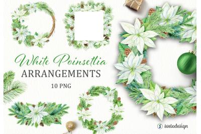 Christmas White Poinsettia arrangememnts watercolor clipart.