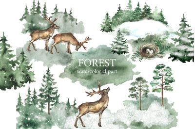 Watercolor forest clipart. Forest pines, trees. Forest landscapes