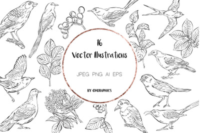 16 Hand Drawn Birds, Leaves and Berries