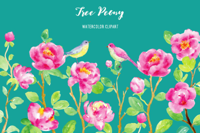 Watercolor Clipart Purple Tree Peony