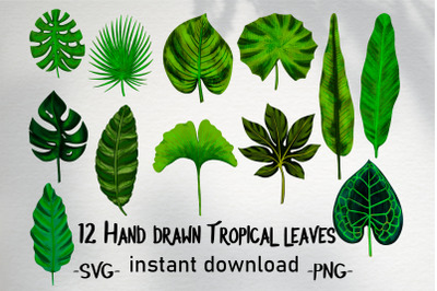 Hand drawn tropical leaves bundle