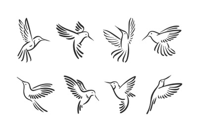Colibri hummingbird line style set
