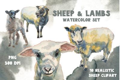 Sheep & Lambs watercolor set