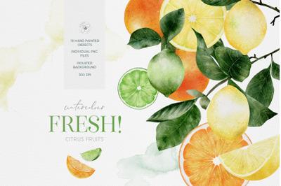 Watercolour Citrus Fruit Leaves Summer Fruit Lemons Limes