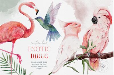 Watercolour Exotic Birds, Tropical Birds Watercolour Clipart