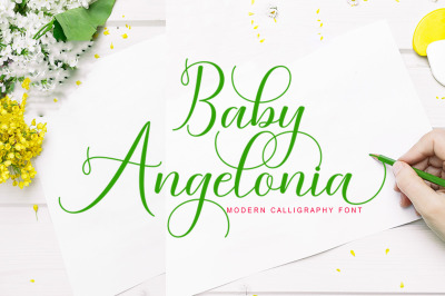 Baby Angelonia