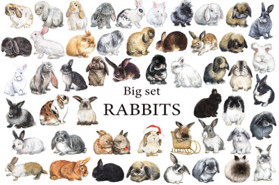 Large set of RABBITS. Watercolor clipart with decorative breeds of rab