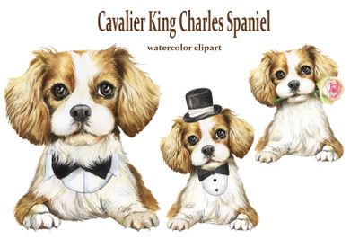 Cavalier King Charles Spaniel watercolor clipart with a pet.