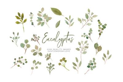 Eucalyptus Greenery Clipart, floral arrangements