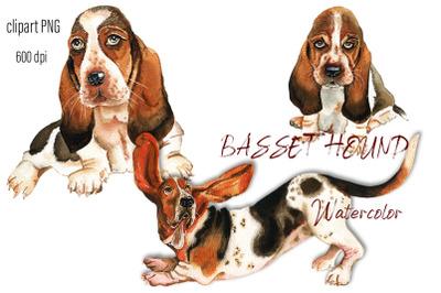 Basset Hound Watercolor. Portrait  dog clipart