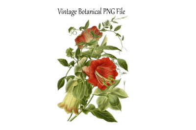 Vintage Botanical Flowers Transparent PNG