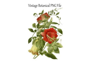Vintage Botanical Flowers Transparent PNG