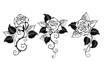 Three Outline Roses