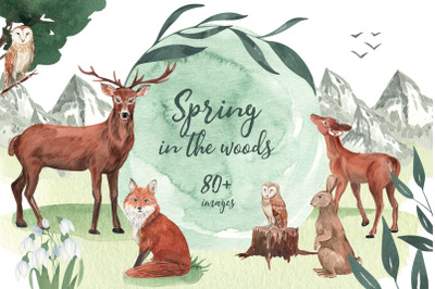 Spring in the Woodlands