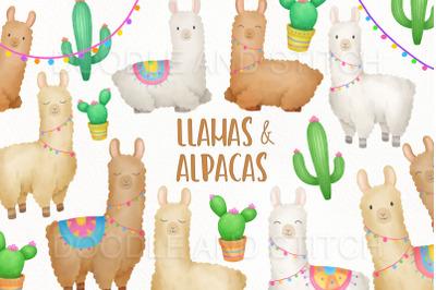 Llama and Alpacas Clipart Illustrations