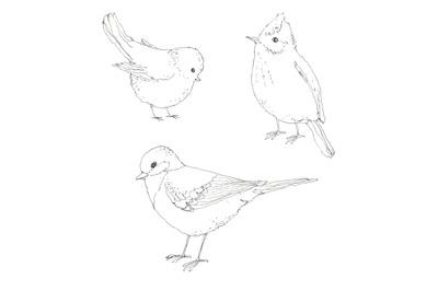 Little spring birds