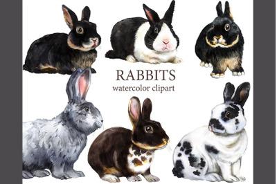 Rabbits watercolor clipart. Pets farm animals, rabbit breeding, animal
