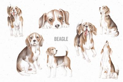 Beagle hand drawn clipart