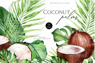 Coconut watercolor clipart, Modern tropical clipart coconut png, Palm