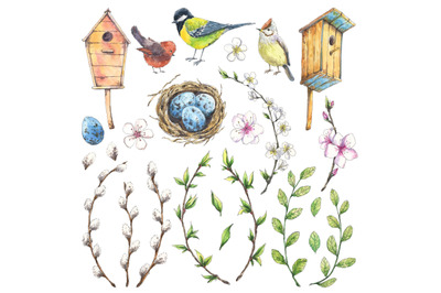 Spring birds and plants set hand drawn in watercolor
