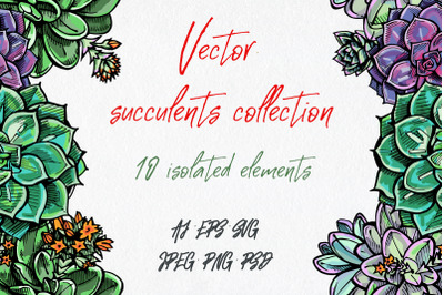 Vector succulents collection