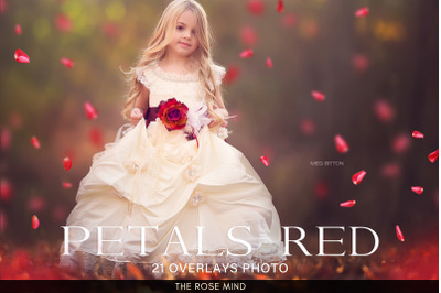 Petals Overlays,  Petals red rose overlays